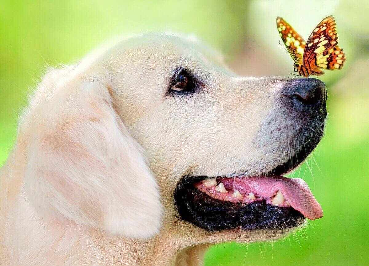Алмазная вышивка le093 «Пёс и бабочка»