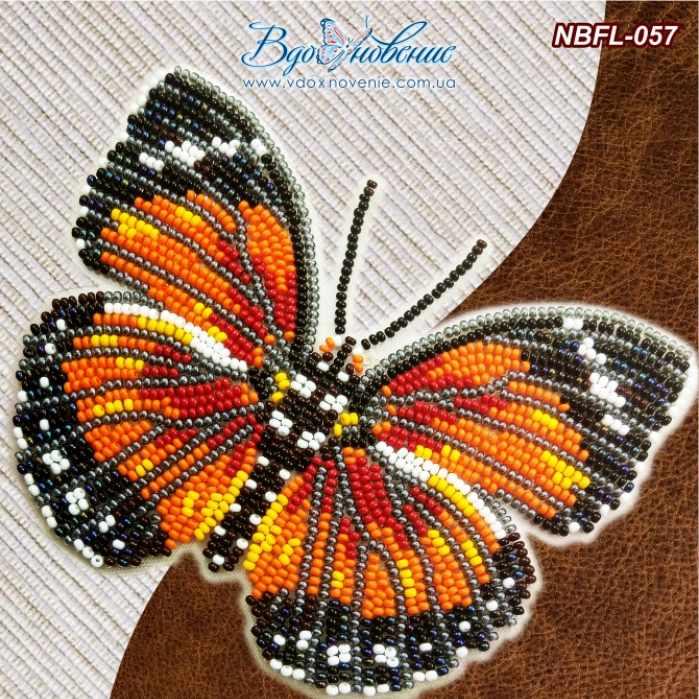 NBFL-057 Euphaedra Eleus