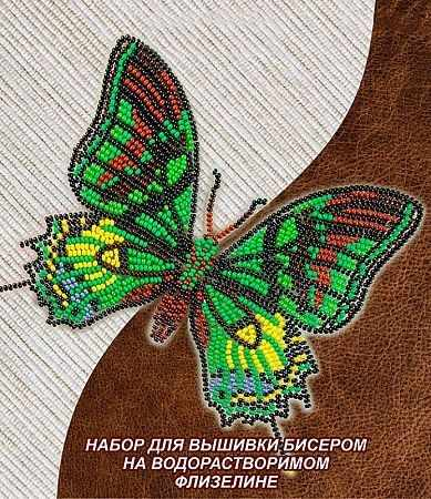 NBFL-031 Тейнопальпус Императорский