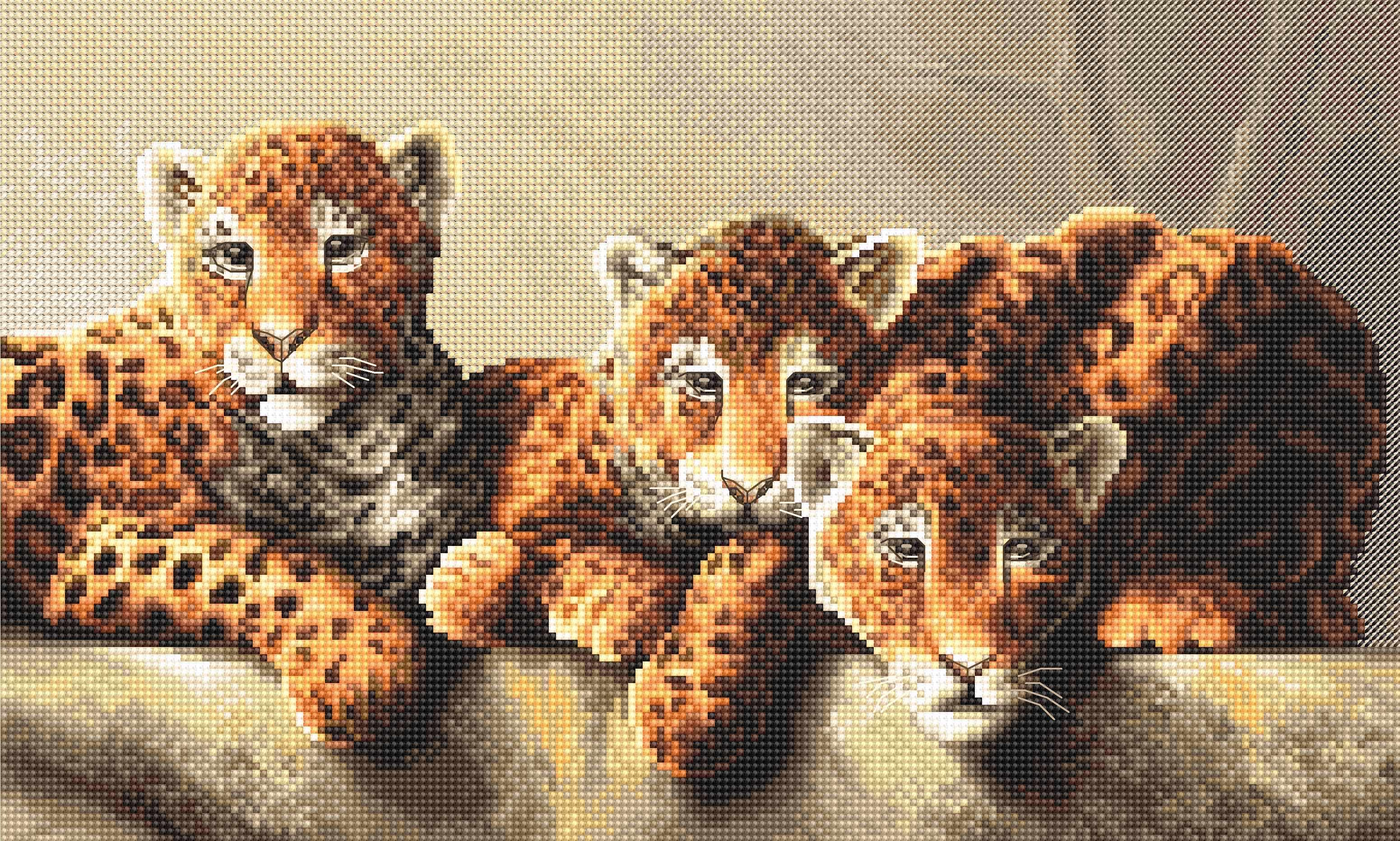 910 Leopards  - Leti