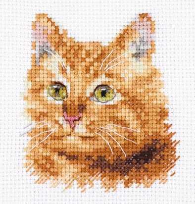 0-207 Животные в портретах. Рыжий кот