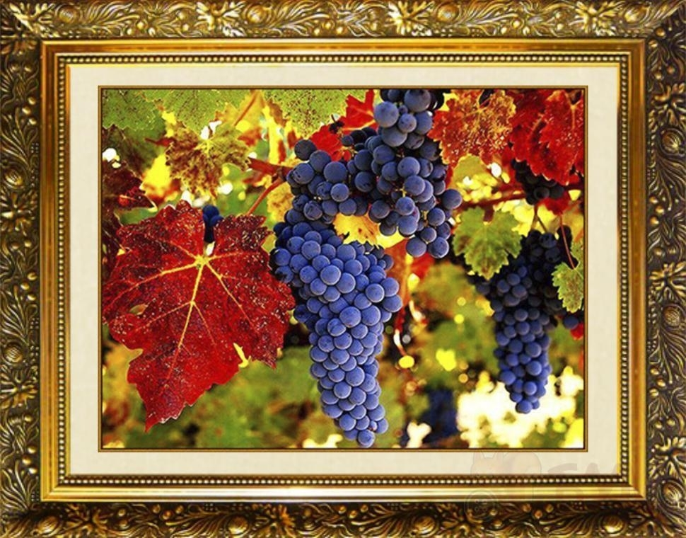 SP-34 Виноградная гроздь - Милато