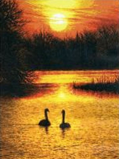 0968 Swans at sunset