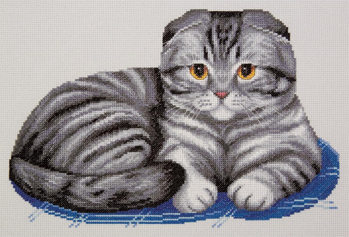 K-7221 Шотландский вислоухий кот