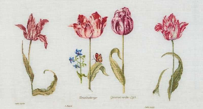 786 тюльпаны джейкоба маррель и джудит лейстер, 16-й век