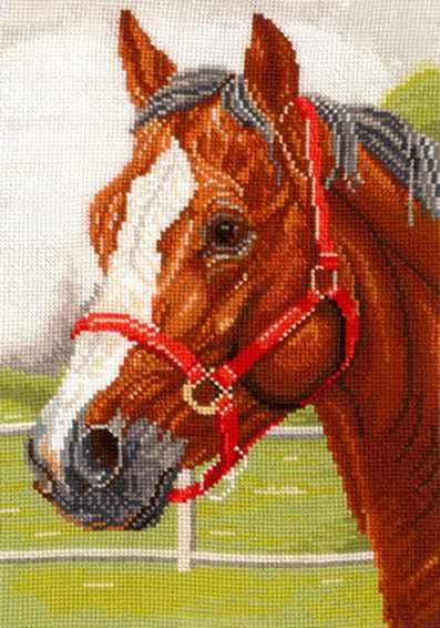 Г-05 Горячий конь