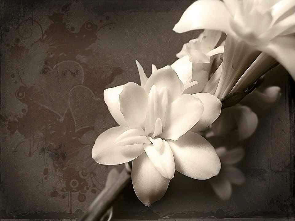 N-125 Белые цветы - мозаика Милато