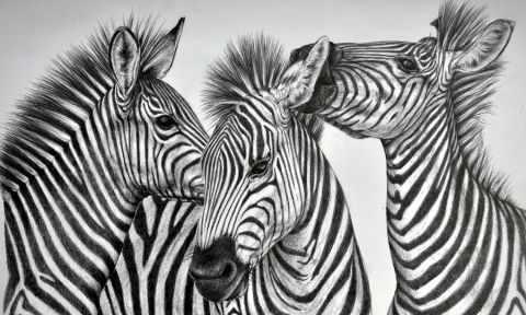 Зебры (АЖ-1183) - картина стразами