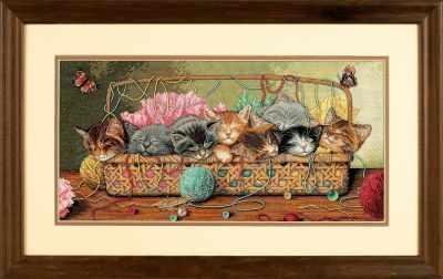 35184 DMS Новорожденные котята