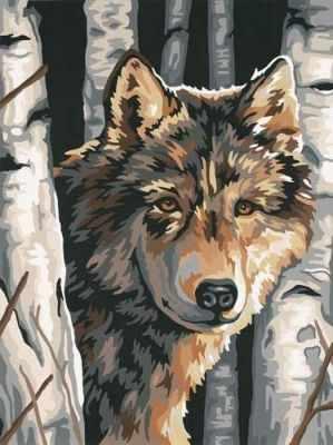 91325 DMS  Волк среди берез   раскраска - Картины по номерам «Dimensions»