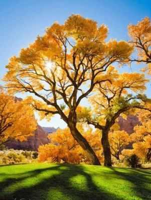 Купить со скидкой Осеннее дерево (АЖ-1166) - картина стразами