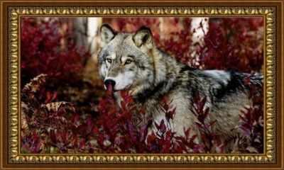 Z-108 Серый волк  мозаика Милато - Мозаика «Milato»