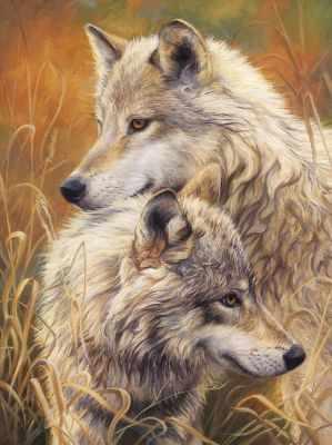 Волчья нежность (АЖ-1403) - картина стразами