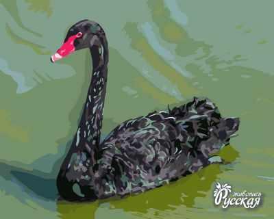 Набор для раскрашивания по номерам Русская живопись H019 Чёрный лебедь