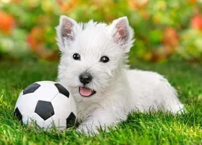 В-06823 Белый щенок с мячом, 60 деталей