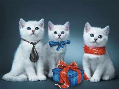 Фото #1: 166/Б Нарядные котята - набор для вышивания (МП)