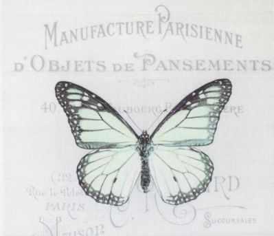 AM650009 Купон с рисунком Бабочка зеленая на сером фоне