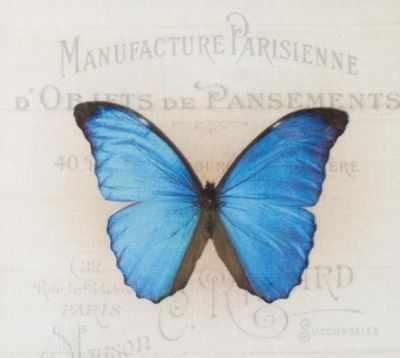 AM650011 Купон с рисунком Бабочка ярко-синяяя на бежевом фоне
