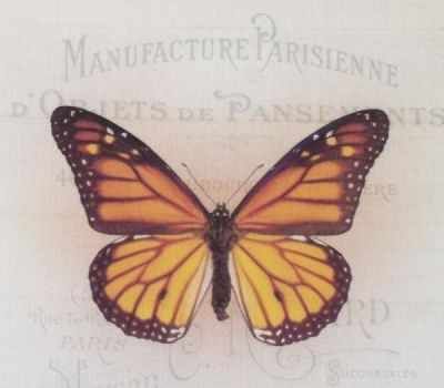 AM650012 Купон с рисунком Бабочка оранжевая на бежевом фоне
