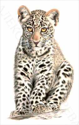 35-2680-НМ Маленький хищник  набор для вышивания (А. Токарева) - Наборы для вышивания Александры Токаревой