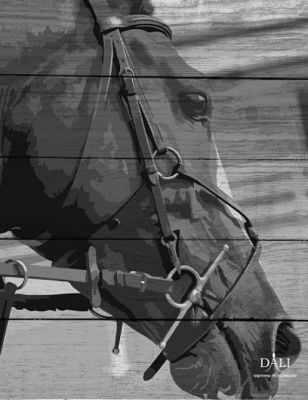 WF001 Лошадь в поводьях
