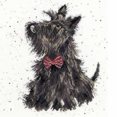 Фото #1: XHD13 Scottie (BT)