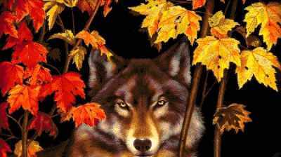 37-2304-НВ Волк в лесу  набор для вышивания (А. Токарева) - Наборы для вышивания Александры Токаревой