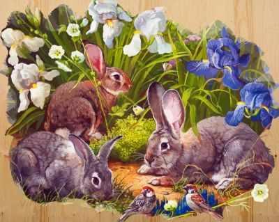 DER008 Кролики и воробышек - Раскраски по номерам «Color Kit»