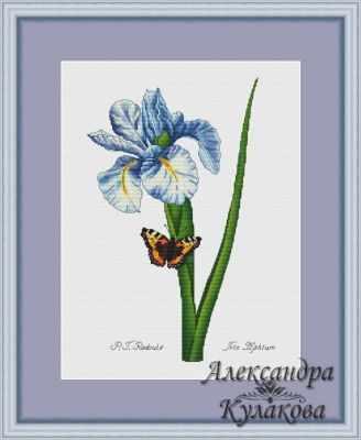 наборы для вышивания Александра Кулакова Ирис - набор канва для вышивания zweigart linda schulertuch цвет бежевый 50 х 70 см 1235 264