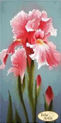 Основа для вышивания с нанесённым рисунком Tela Artis ТМ-127 - Садовые зарисовки. Розовый ирис - схема для вышивания (Tela Artis)