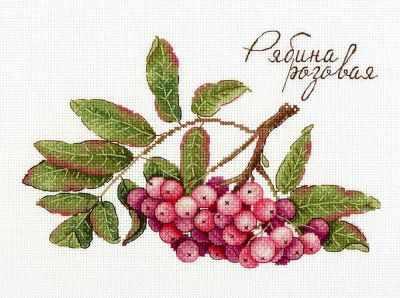 НВ-693 Дары природы. Рябина розовая