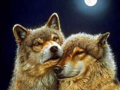Алмазная мозаика Алмазная живопись Алмазная вышивка Волк и волчица (АЖ-1200) - картина стразами стилус