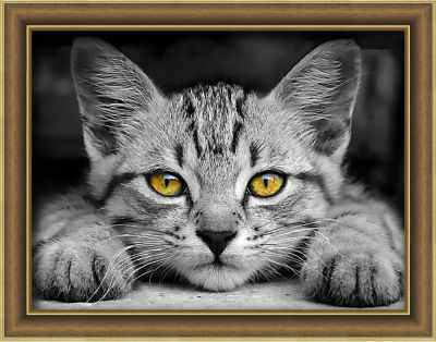 Фото - Алмазная мозаика Алмазная живопись Алмазная вышивка Желтоглазый котенок (АЖ-1807) - картина стразами алмазная мозаика алмазная живопись алмазная вышивка львиный прайд аж 1399 картина стразами