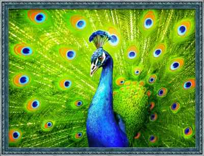Фото - Алмазная мозаика Алмазная живопись Алмазная вышивка Красавец павлин (АЖ-1801) - картина стразами алмазная мозаика алмазная живопись алмазная вышивка львиный прайд аж 1399 картина стразами