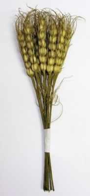 DKB033 Декоративный букетик Рукоделие Колоски пшеницы